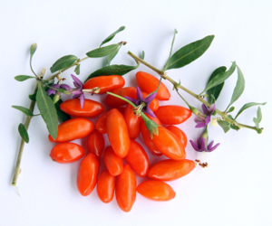 goji_berry_plants