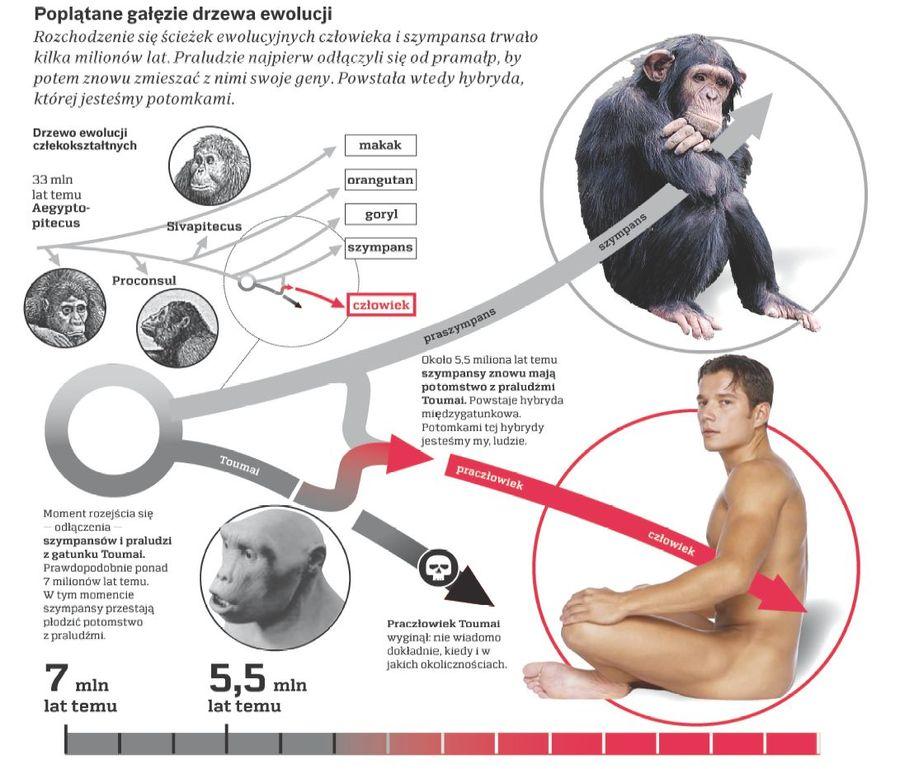 rf ewolucja