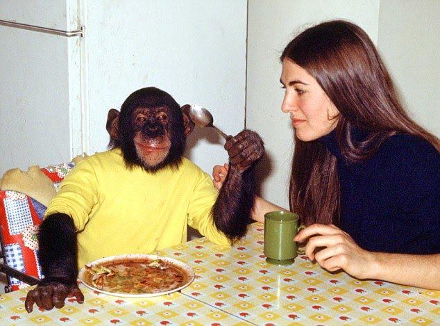 małpa je