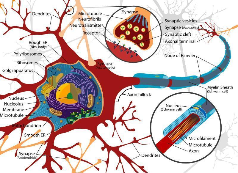 neuronecomplex