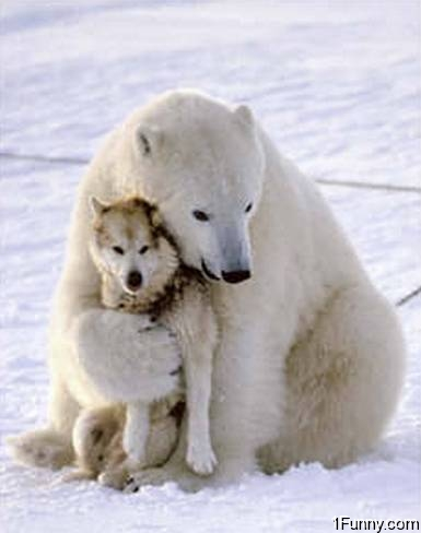 polar-bear-hugging-dog